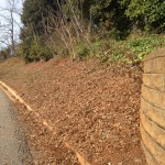 """Photo Caption: This strip of our garden will be planted in wildflowers and strawberries. We're going to coppice the """"weed"""" trees for a couple of seasons to keep the hillside soil stable while we establish other plantings."""